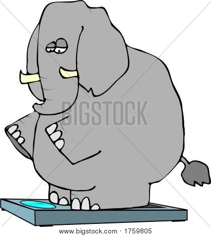 This illustration depicts an elephant standing on bathroom scales. poster