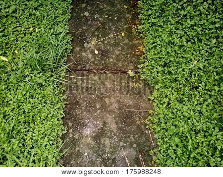 Simple narrow walking concrete footpath among grass