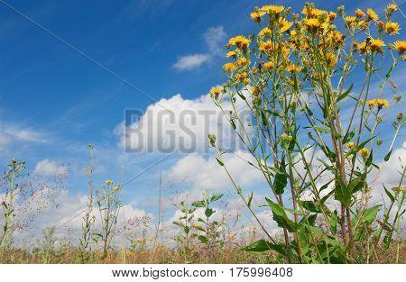 Romantic wild flowers in summer field. Beautiful summer field and sky.