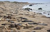 Sea lions on the beach in ca poster