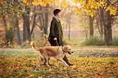 A girl and her dog (Labrador retriever) walking in a park in autumn poster