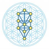Flower of Life in Tree of Life. Sephirots of Kabbalah in ancient symmetrical symbol, composed of multiple overlapping circles, forming a flower like pattern. Sacred geometry. Illustration. Vector. poster