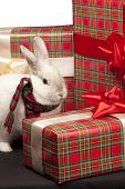 Image of fluffy rabbit rounded by gift boxes with red bows poster