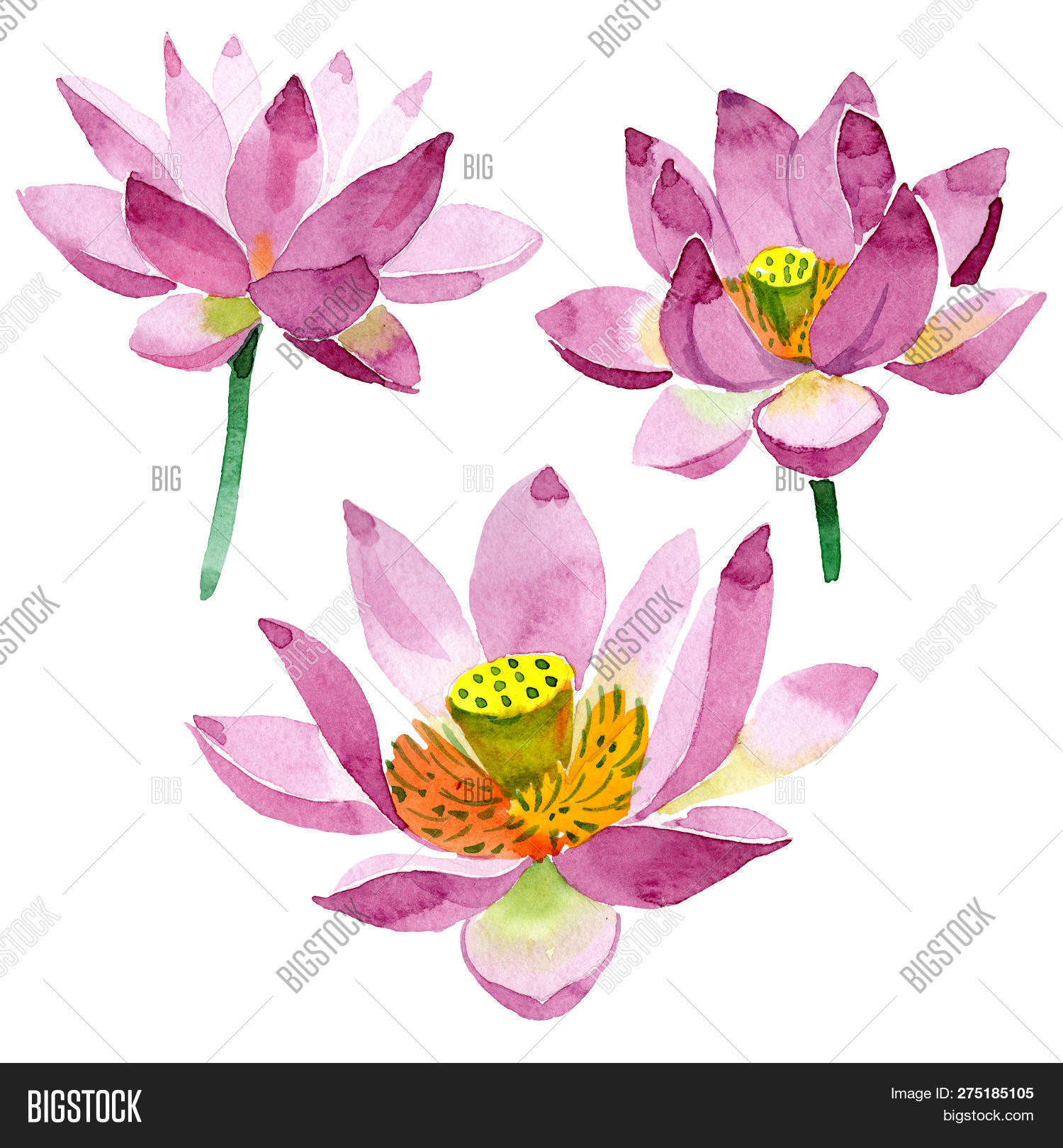 Purple Lotus Floral Image Photo Free Trial Bigstock