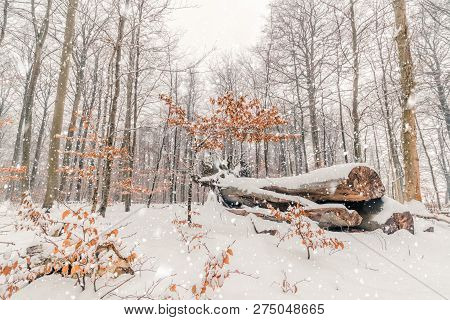 Idyllic Winter In The Forest With Snow Falling And Painting The Nature White