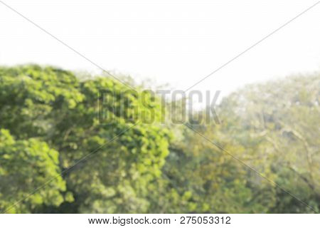 Blurred Tree Bokeh Soft Sun Light, Bokeh Forest Abstract Bush Leaves Bright Green, Blur Tree Natural