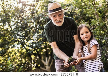 Grandparent With Grandchild Working In Summer Garden