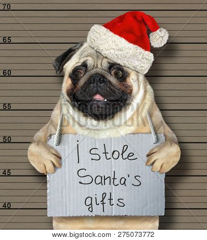 The Bad Dog In A Red Hat Stole Santa Claus Gifts For Christmas. He Is Arrested For It And Sent To Pr