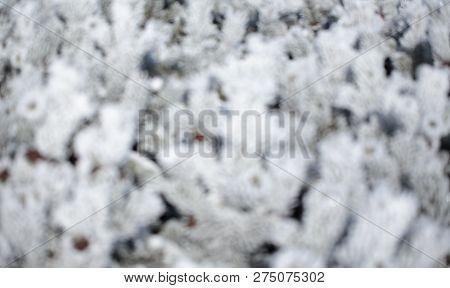Beautiful Soft Winter Texture