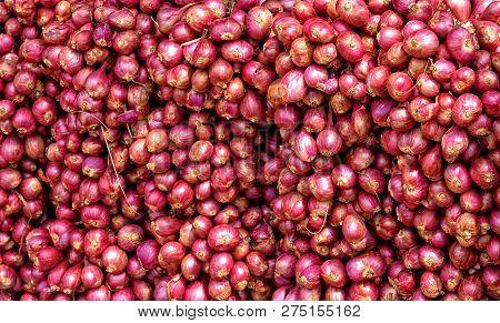 Red Onion. Beautiful Harvest Background. Fall Season. Close Up. Organic Food. Nice Backdrop Of Veget