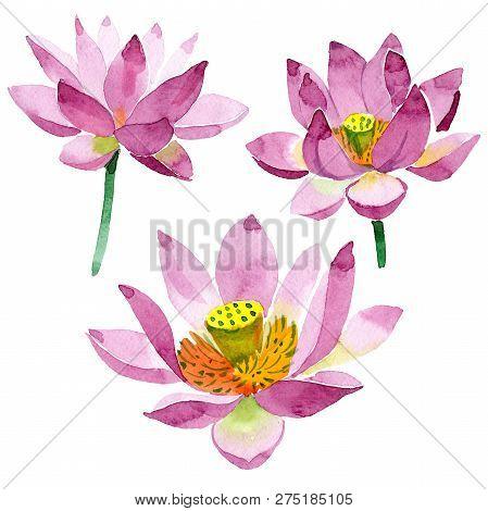 Purple Lotus. Floral Botanical Flower. Watercolor Background Illustration Set Isolated.