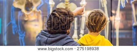 Dad And Son Are Watching The Skeletons Of Ancient And Modern People. Human Evolution Is The Evolutio