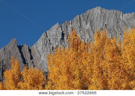 Autumn Poplar Trees And Mountains