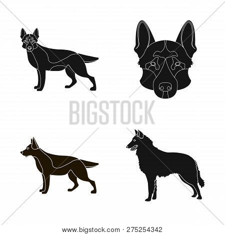 Vector Illustration Of  And Sheepdog Sign. Collection Of  And German Vector Icon For Stock.