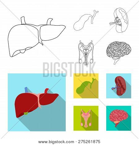 Vector Illustration Of Body And Human Icon. Collection Of Body And Medical Stock Symbol For Web.