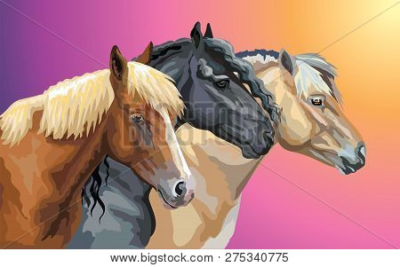Set Of Colorful Vector Portraits Of Horses Breeds (norwegian Fjord Pony; Friesian Horse, Byelorussia