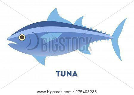 Tuna Fish From The Ocean Or Sea