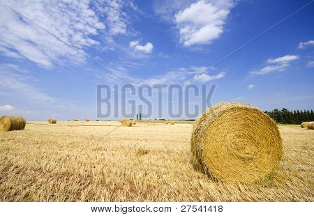 haybales on wheat field
