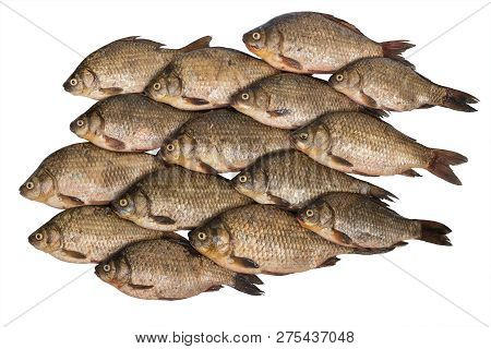 Crucian Carp Stacked Rows Isolated On White Background