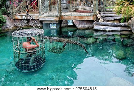 Man And A Pool With Crocodiles. Man Stands Inside Of A Cage With Large Holes And Plunges Into Water