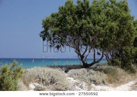 Mastichari beach on Kos Island Dodecanese, Greece