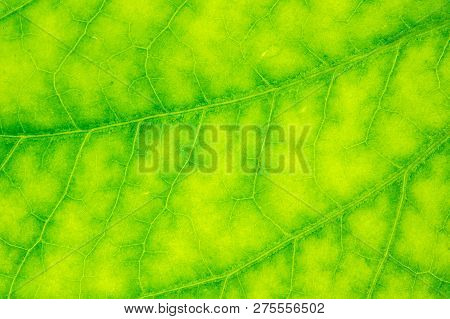 Detail Of A Fresh Green Leaf With A Drop Of Dews Close Up Background.