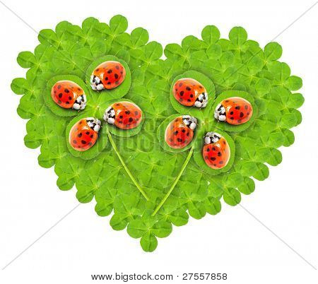 Funny picture of a green heart with clover and cute ladybugs.