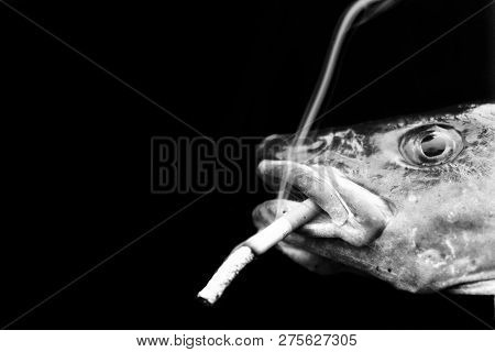 Funny Picture Of A Fish Smoking A Cigaret