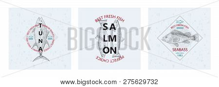 Best Fresh Fish Tuna, Salmon, Seabass. Vector Illustration