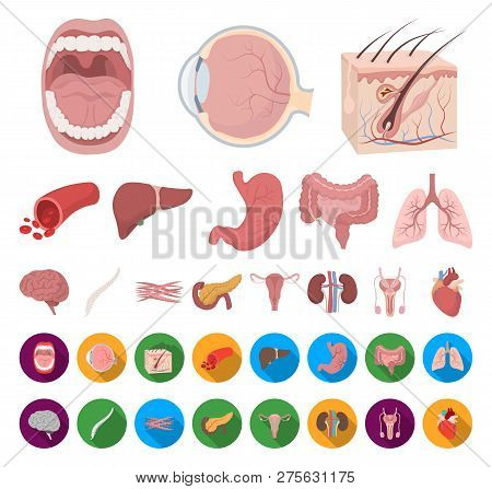 Internal Organs Of A Human Cartoon, Flat Icons In Set Collection For Design. Anatomy And Medicine Ve