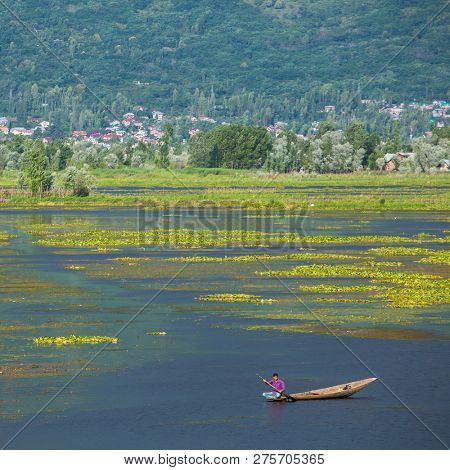 Srinagar, India - June 15, 2017: Man riding a shikara boat on the Dal lake in Srinagar, Kashmir, India.