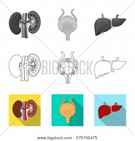 Isolated Object Of Body And Human Logo. Collection Of Body And Medical Stock Vector Illustration.