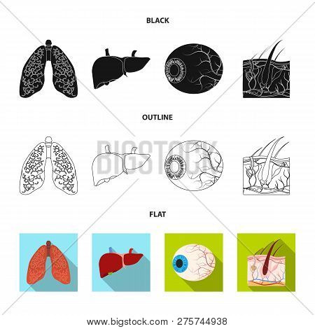 Vector Illustration Of Body And Human Symbol. Set Of Body And Medical Stock Vector Illustration.