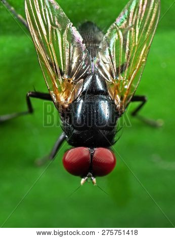 poster of Macro Photography of Noon Fly with Orange Wings on Green Leaf
