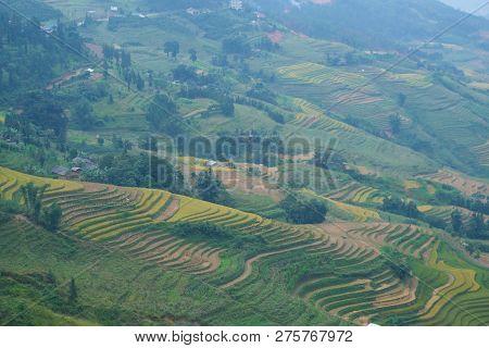 Vietnam Landscape. Rice Fields On Terraced Of Mu Cang Chai, Yenbai, Vietnam. Royalty High-quality Fr