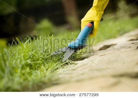 Grass Trimming