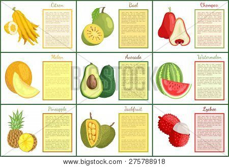 Citron And Chompoo Posters Set With Text Sample Vector. Durian Lychee And Jackfruit, Pineapple And A