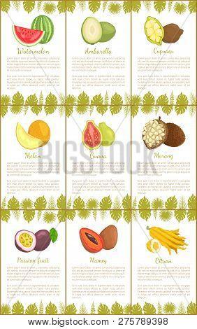Watermelon And Ambarella, Cupuacu And Melon, Guava And Marang, Passion Fruit And Mamey, Citrus Citro