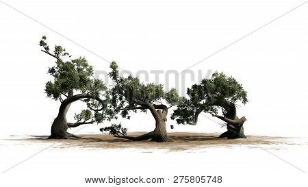 Jeffrey Pine Tree Cluster On A Sand Area - Isolated On White Background - 3d Illustration