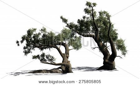 Jeffrey Pine Tree Cluster With Shadow - Isolated On White Background - 3d Illustration