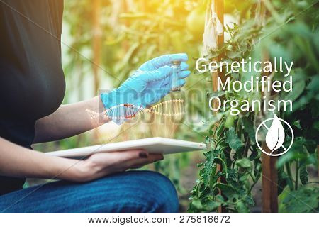 Scientist genetic engineer with a tablet testing the plant for the presence of genetic modification. Organisms and products polluted with GMOs poster