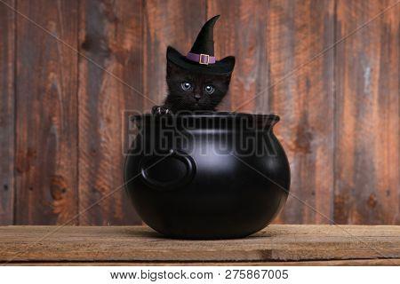 Halloween Themed Kitten Portrait as a Warwick in A Cauldron