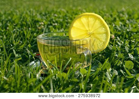 Tea With Lemon In The Grass On The Moning