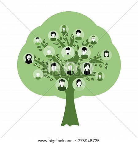 Genealogical Family Tree With Avatars Isolated On White Background. Genealogy Tree For Dna Ancestors