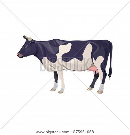 Black And White Spotty Cow. Vector Illustration Isolated On White Background