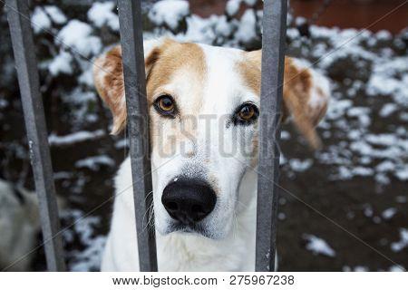 Sad Dog Behind The Bars, Horizontal Image