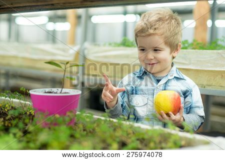 Youth. Concept Of Healthy Youth With Good Future. Youth In Face Of Happy Little Boy Hold Fresh Apple