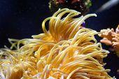 Beautiful coral in an aquarium of at Monte Carlo Monaco. poster