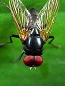 Macro Photography of Noon Fly with Orange Wings on Green Leaf poster