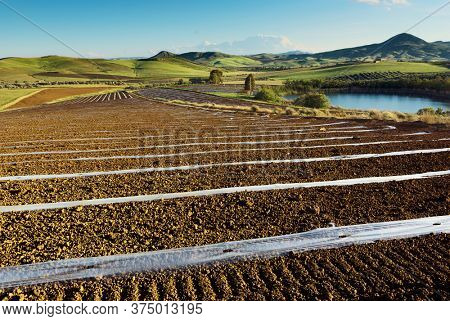 field landscape of Sicily mediterranean agriculture with mulch film and farm pond